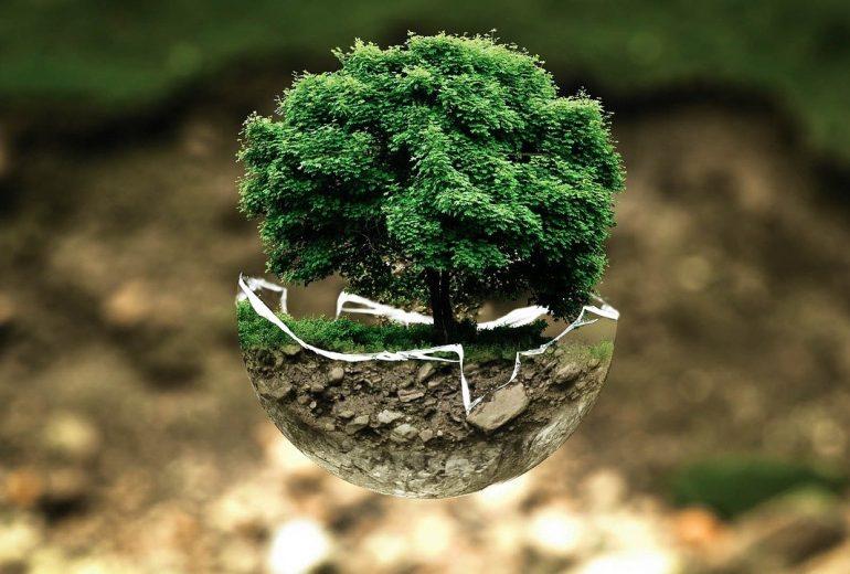 Educación Medio Ambiente